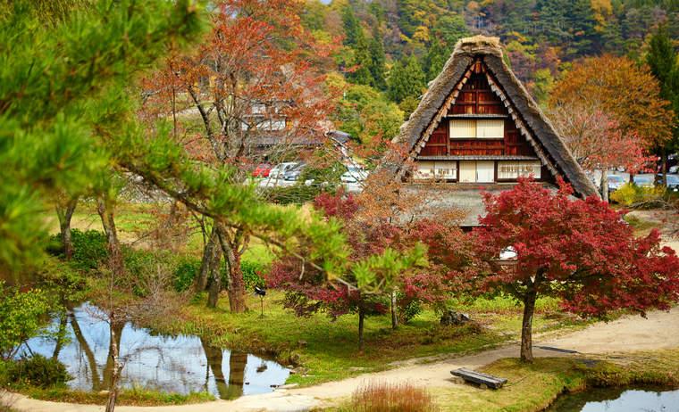 Traditional thatched-roof gassho-zukuri homes