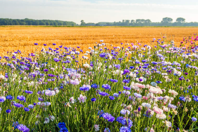 biodiversity, field