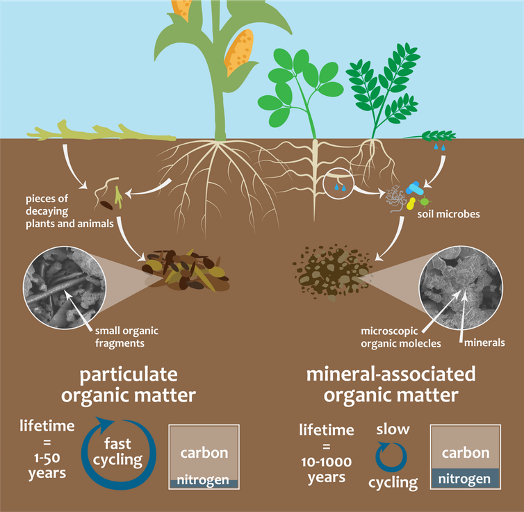 Overview of how particulate and mineral-associated organic matter form and function
