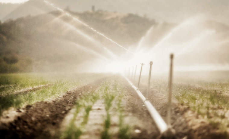 Sprinklers in field
