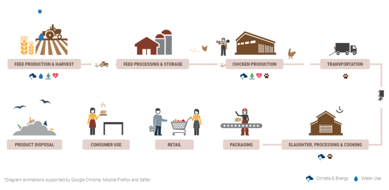A chicken supply chain diagram by TSC