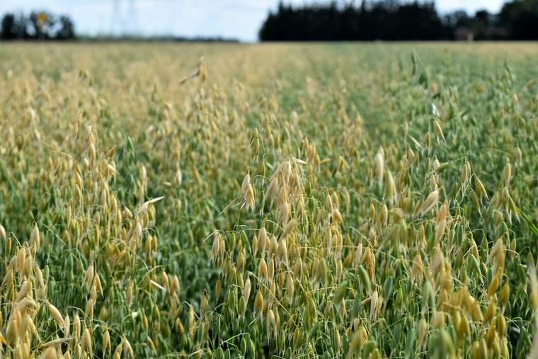 Winnipeg oat farm, General Mills, regenerative agriculture