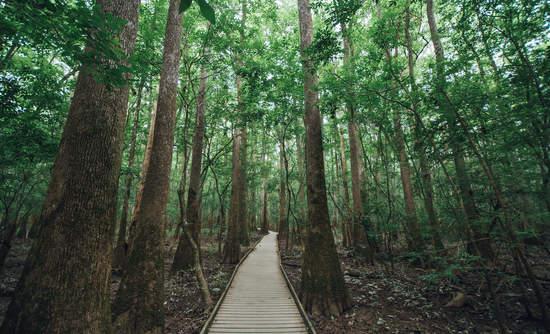 Congaree Forest, South Carolina