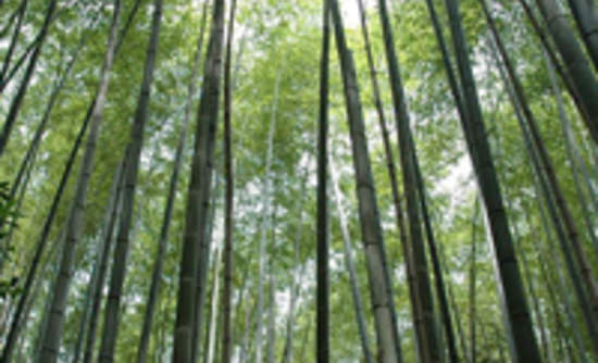 Growing The Future Of Bamboo Products Greenbiz
