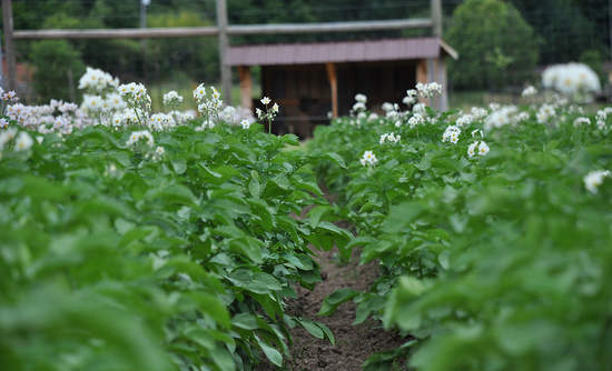 cover crops, regenerative agriculture