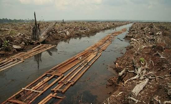 Asia Pulp & Paper commits to end Indonesian rainforest destruction