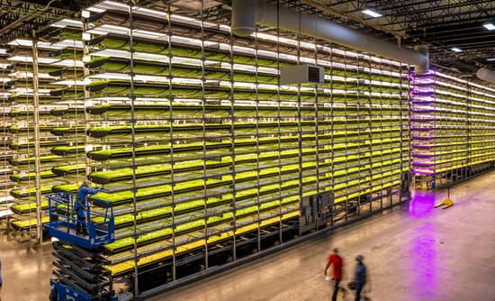 An AeroFarms growing facility in Newark, New Jersey.