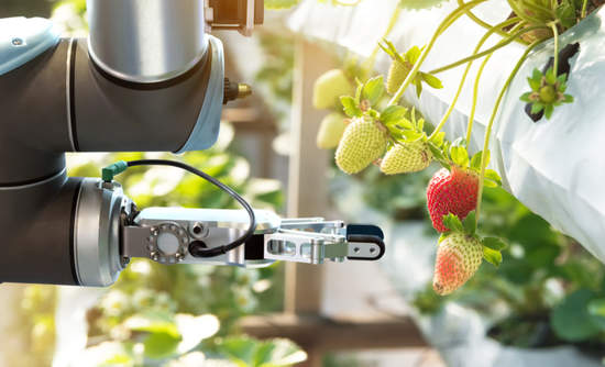 Concept of a robot helper at an indoor strawberry farm