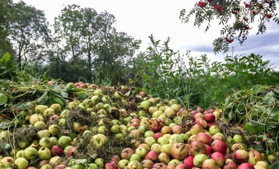 fruit waste on farm