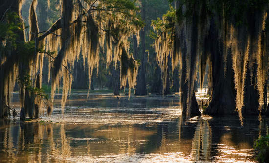 Spanish moss in the Louisiana Bayou