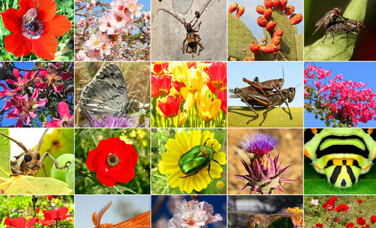 Biodiversity collage