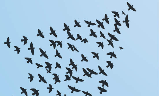 Birds flying in the sky