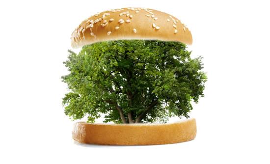 A tree inside a burger bun