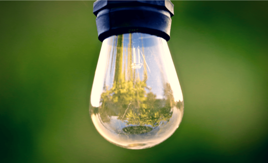 lightbulb with plants reflected in it