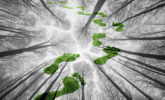 How forest carbon can provide ROI for your sustainable