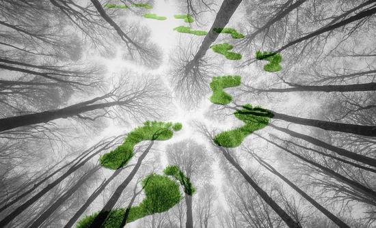 forest carbon footprints