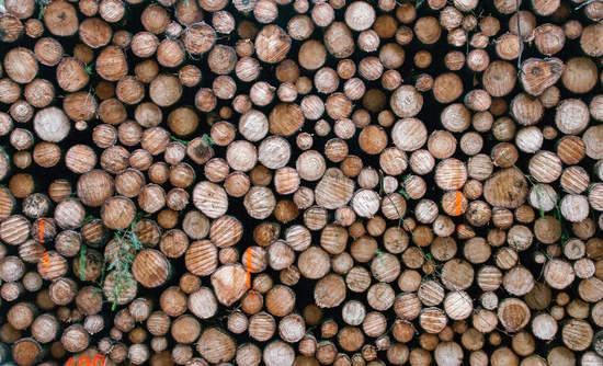 A big pile of logs
