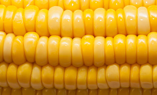 corn, scaling organic sustainable food