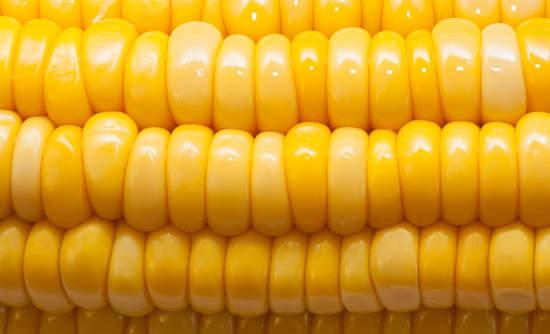 corn, scaling organic sustainable food