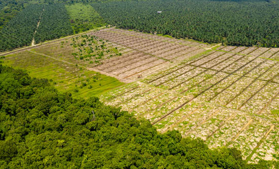 Deforestation in Borneo for palm oil plantations