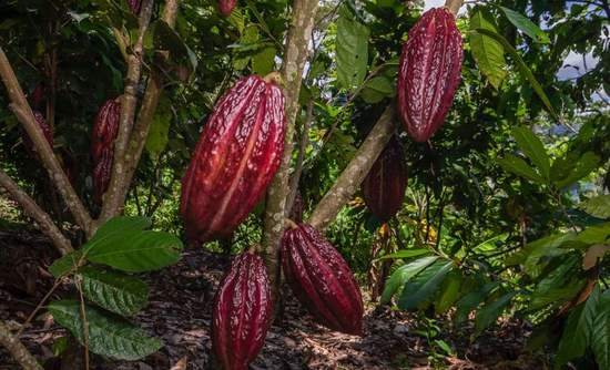 Mars, cocoa