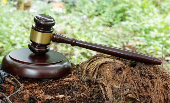 More than 500 climate-related lawsuits have emerged in half a decade.