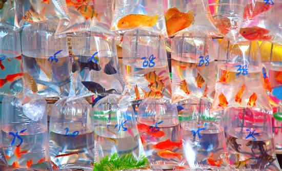 Fish in plastic bags in Hong Kong