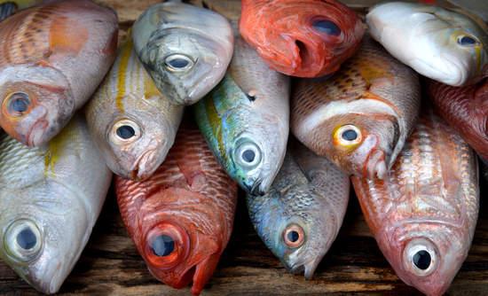 Fish market, fresh fish