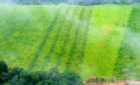 Remnants of rainforest edge agriculture near Rio Branco, Acre, Brazil
