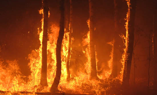 Trees in a forest fire