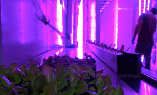 Freight Farms urban agriculture