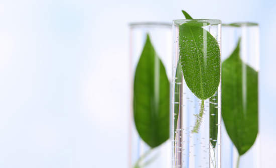 Leaves in a test tube