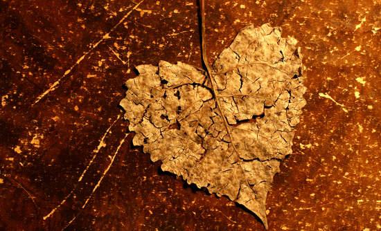 Broken heart leaf