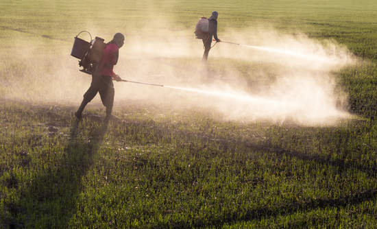 Workers spraying herbicides on farmland.