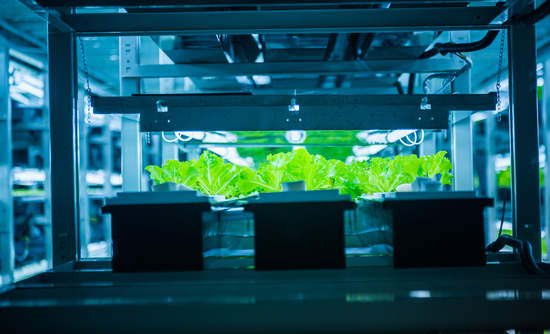 hydroponic plant sustainability