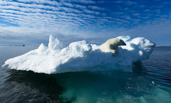 polar bear on an ice floe