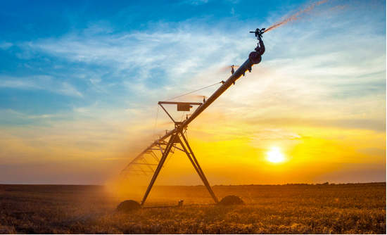 Irrigation system in a wheat field at sunrise