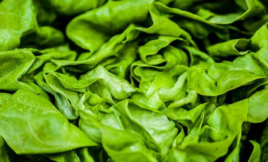 Lettuce food waste innovation