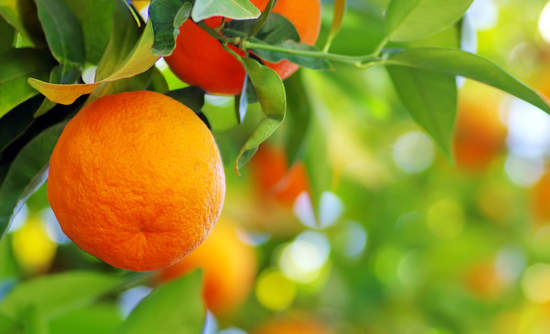 low-hanging fruit business sustainability