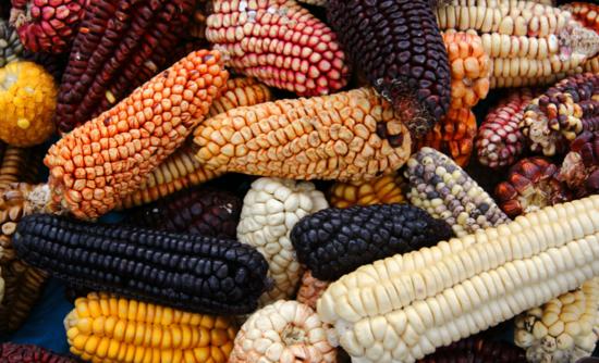 Image result for global food supply