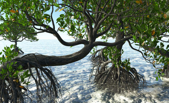 3D rendering of Florida mangroves