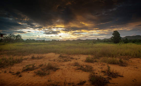 Palm oil plantation in Kalimantan.