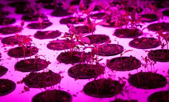 The Plant Chicago aquaponic urban farming circular economy