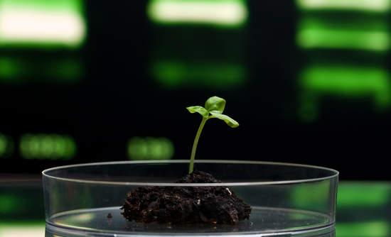Mars, IBM Big Data and food supply chain genomics