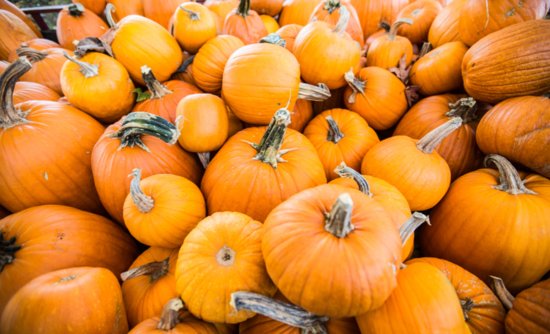 Pumpkins in a pile