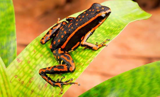 rainforest alliance sustainable business Staples Avery Denison Breyers