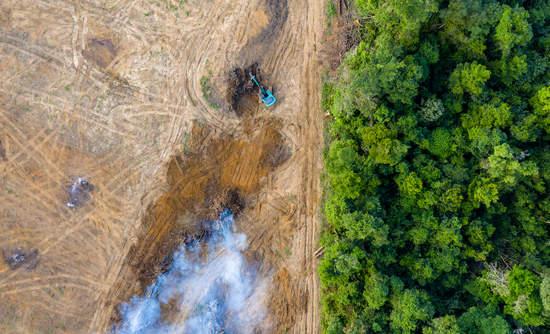 Rainforest, deforestation, palm oil