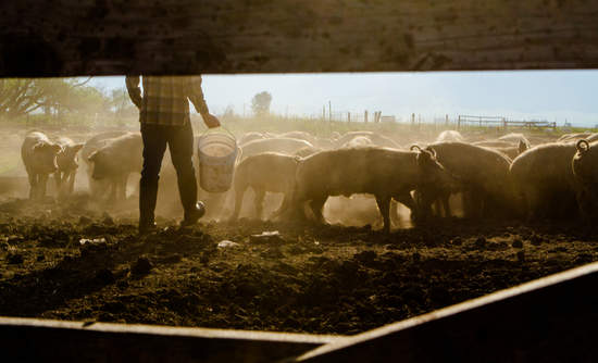 Rancher feeding livestock