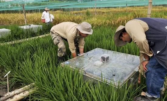 Rice emissions