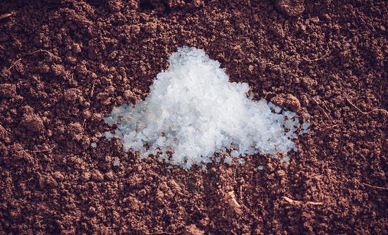 salt on soil